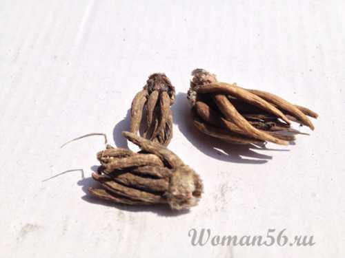 Ранункулюс фото: посев и уход, фото и