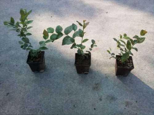 Это становится возможным благодаря заготовке собственных семян