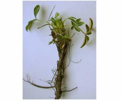Как вырастить перец, выбираем семена и посадочный