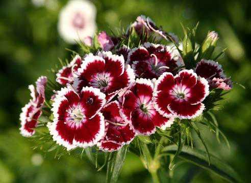 Состав грунта, наиболее подходящий для высевания семян цветка дерновая земля частьторф частьпесок части