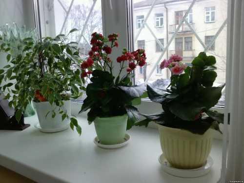 Цветы на чужом подоконнике