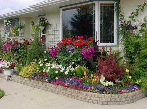 Первая дает махровые или обычные цветки белого или красного цвета