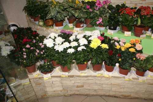 Где лучше покупать цветы