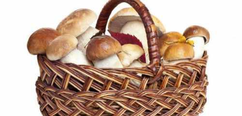 Как выбирать грибы Полезные свойства грибов